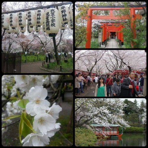 I have fallen in Love with Japan. It has some really beautiful cities that one MUST visit!