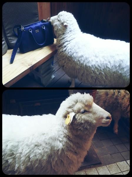 09. sheep third visit