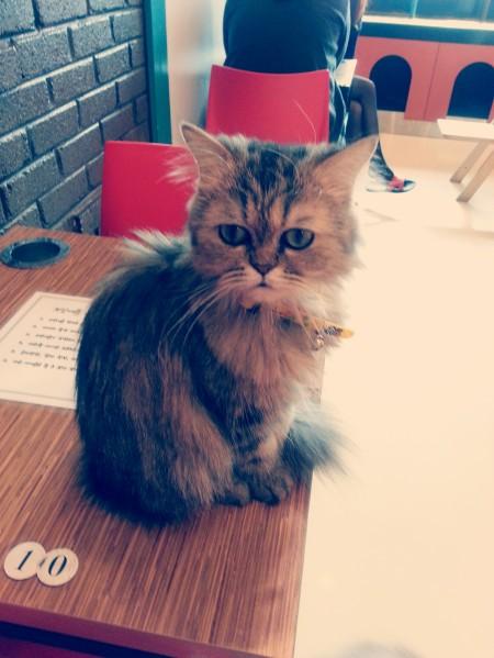cat_cutiecat_lightcross