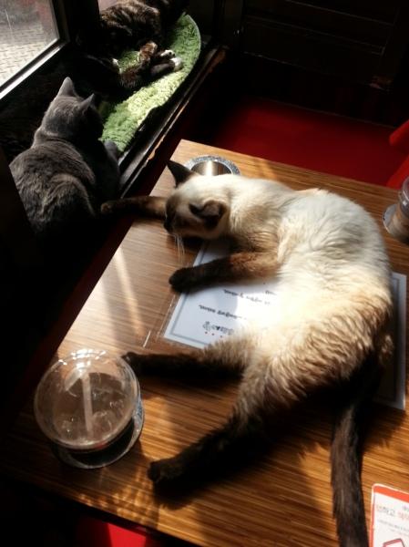 cat_suncat_nofilter