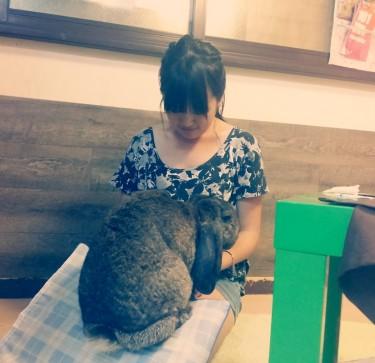 4. huge rabbit