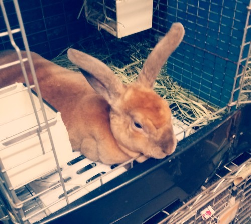 This rabbit looked like a camel to me