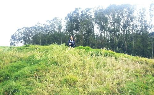 crissy fields