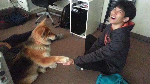 doggie give hand