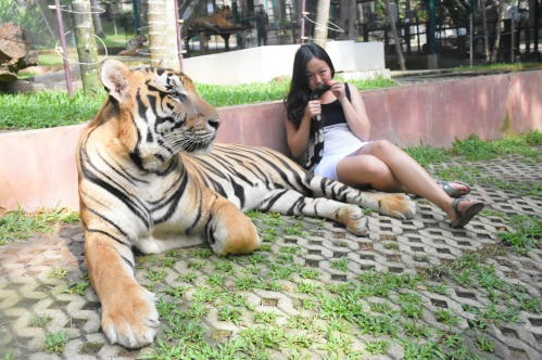 Big cat and mimi