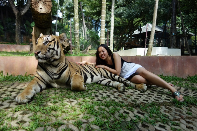 Big tiger and Mimi 2
