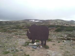 07. Snohetta bull